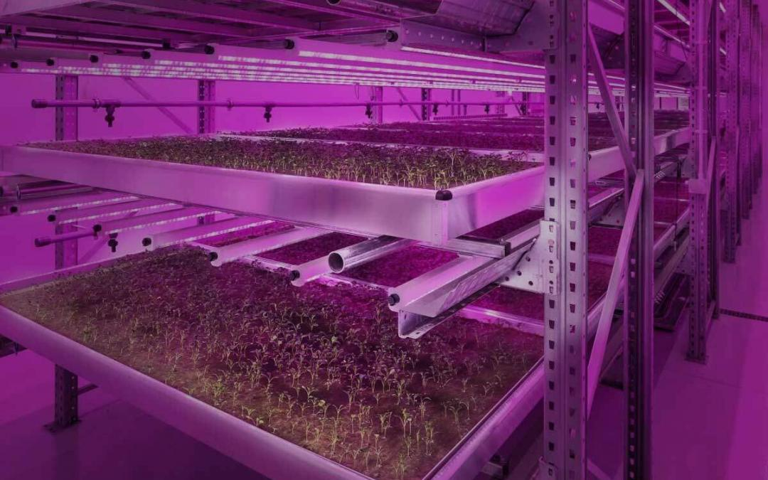 Cleanroom Farms of the Future